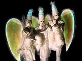 Echassiers blancs lumineux - Les anges